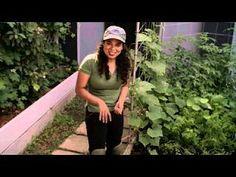 Garden Girl TV with Patti Moreno - love watching her