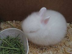 It's a fluffy bunny ball!