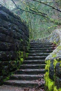 cottagesgarden shedsoutdoor, lisheen castl, garden design, ruin, mossi staircas, ancient step, mossi step