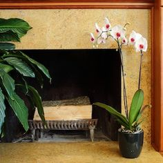 orchid care, plant project