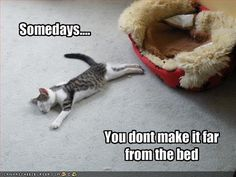 funny animals, funny sayings, beds, funny pictures, mondays, funny cats, funni, kitty, hilarious sayings