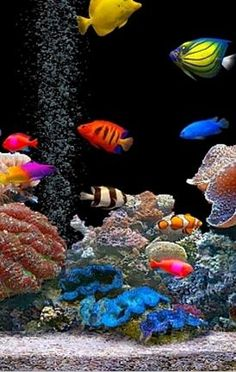~~ Fish swimming in a aquarium ~~