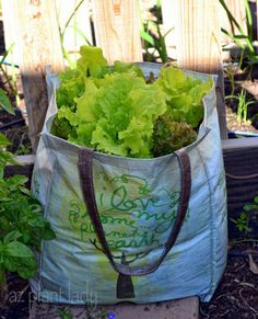 Love lettuce? Fall is a great time to plant some in your garden, at least 2 weeks before the first frost.  Plant your own in a recyclable grocery bag.
