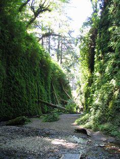 Fern Canyon. Redwood National Park