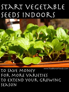 3 Reasons to Start Seeds Indoors from Traditional-Foods...