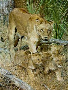 Mama Lion & Her Babies