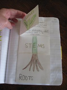 Here's an idea for a foldable on the parts of a plant.