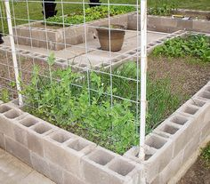 My Survival Garden Trellis Update Pics - Homesteading Today