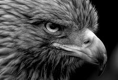 """Photo """"FeatheronmyBeak"""" by eyestrange"""