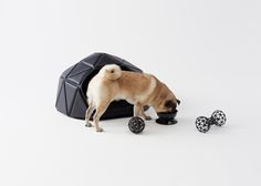 dogs, pug puppies, product design, pet, nendo, dog beds, dog accessories, business design, dog care