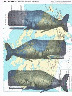 Whales.Collage.Map