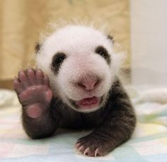 OMG, 40 way too cute baby animals