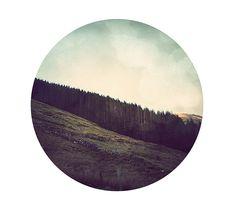 Irish Forest - Marco Suarez