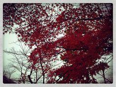 colored leaves in Arashiyama, Kyoto.