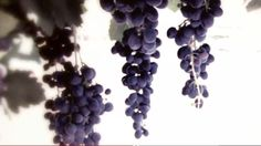 Phone: 830-997-TOUR  Toll Free: 877-TEX-WINE  tour@texas-wine-tours.com