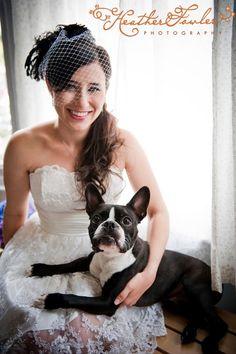 Boston terriers in wedding pictures. :)!