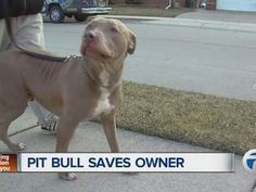 Eastpointe man says his Pit Bull saved his life when he fell into a diabetic coma