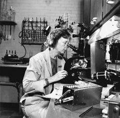 Dorothy Millicent Horstmann, known for work on polio virus.