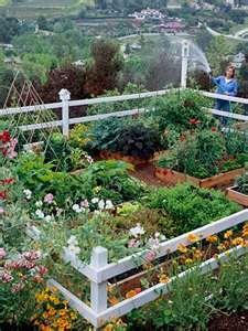Raised vegetable garden