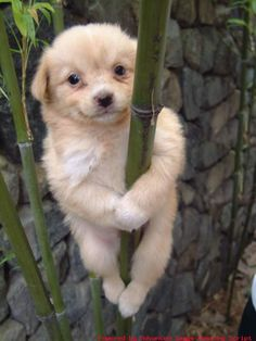 Awwh!! So cute dog on a bamboo tree!