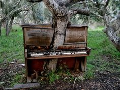 Music under the tree