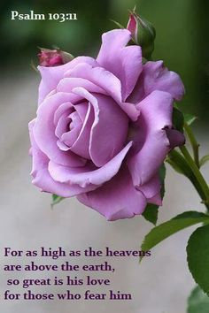 For as high as the heavens are above the earth, So great is His lovingkindness toward those who fear Him.