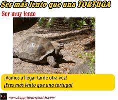 Expresión : Ser más lento que una tortuga.