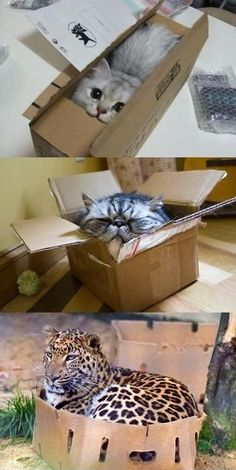 Cats love boxes...