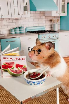 A hamster cooking!