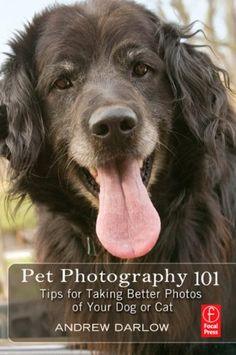 cats, photography 101, pet photography, dogs, pet photographi