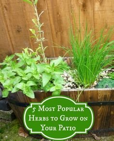 5 Most Popular Herbs to Grow on Your Patio #herbs  http://kouponkrazed.com/2014/03/5-popular-herbs-grow-patio/