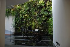 reception vertical garden. patrick blanc