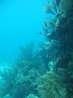 Underwater Biscayne National Park Florida