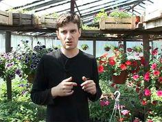 Декоративныпе растения: Петуния.