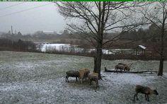 Nova Scotia's Reindeer Cam!