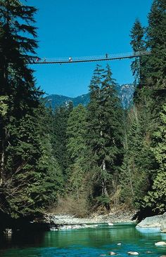 Planks and aluminum wire make up the Capillano Suspension Bridge in Vancouver, BC.  It was really neat, but terrifying.