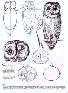 how to: draw an owl