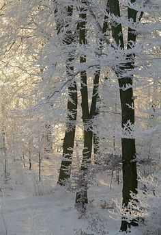 winter trees, snow, winter wonderland, branch, beauti, forest, light, garden, sun