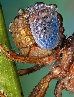 Bugs Macro Water Drops