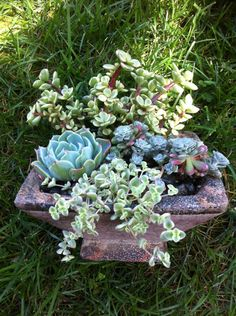 Succulent Planter  DIY Table Top Kit Pink by SucculentOasis, $25.00