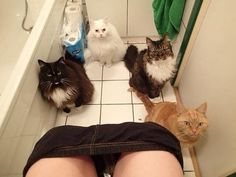 You will never pee alone again