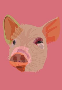 Pig  by Rifo pig