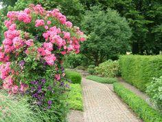 carpet pink, garden paths, flower carpet
