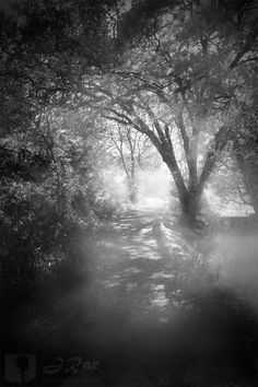 A misty trail I spied in Julian, California has become one of my custom backdrops for my studio. (C) J. Rae Chipera all rights reserved.