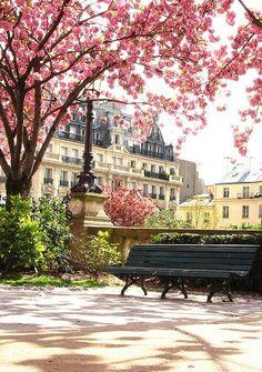 Cherry blossoms, Paris