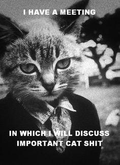 important cat meeting