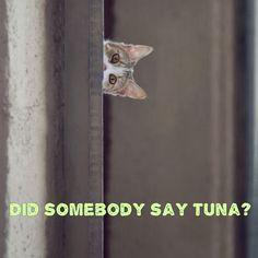 Did somebody say tuna?