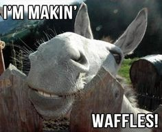 I'm makin waffles! 30 Funny animal captions - part 13 (30 pics), animal pictures with captions, funny memes