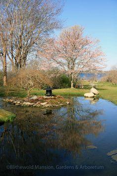 water gardens, cherri prunus, water gardendaffodil