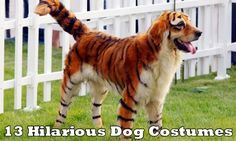 ` crazy-dog-grooming